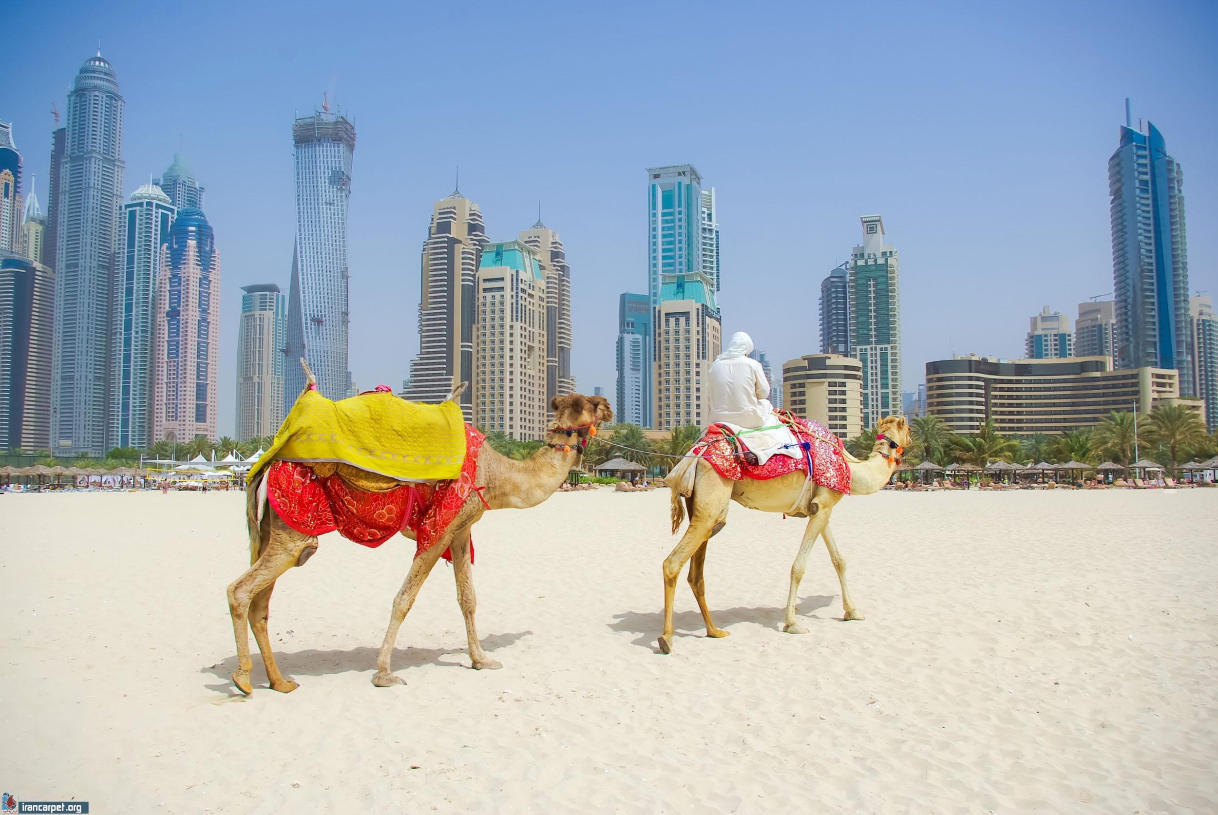 فرش ماشینی امارات متحده عربی_irancarpet